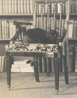 Mark Twain's Cat Bambino