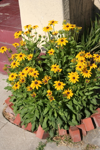Bounty_of_susans_2