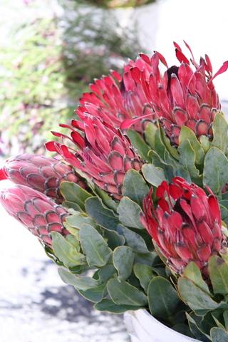 Flowering_food